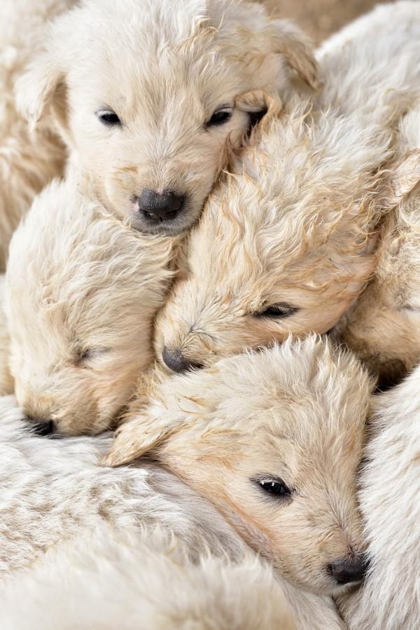 bundle-of-puppies