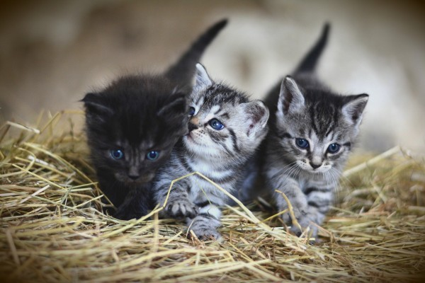 kittens-cat-of-the-day