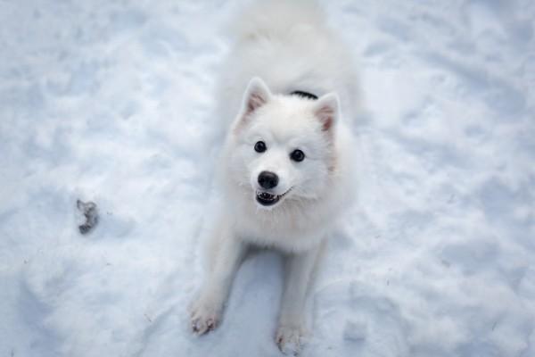 snow-pup