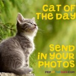 Send us photos of your cat to be featured as Cat of the Day - Each month, one photo will be chosen to win a £10 Amazon Gift Card