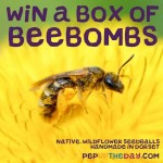 COMPETITION: WIN a box of 5 Native Wildflower Beebombs - worth £29.99