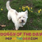 WIN BY SENDING US YOUR PHOTOS to feature as Dog of the Day
