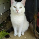 Cat of the Day - 4th July 2020 - Mr Dave Pludds