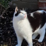 Cat of the Day - 5th August 2020 - Pippi