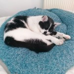 Cat of the Day - 19th August 2020 - Smudge