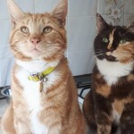 Cat of the Day - 26th August 2020 - Pete and Phyliss