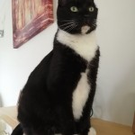 Cat of the Day - 29th August 2020 - Jess