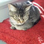 Cat of the Day - 4th September 2020 - Suzi
