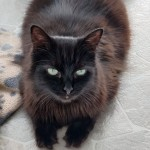 Cat of the Day - 6th September 2020 - Chevy